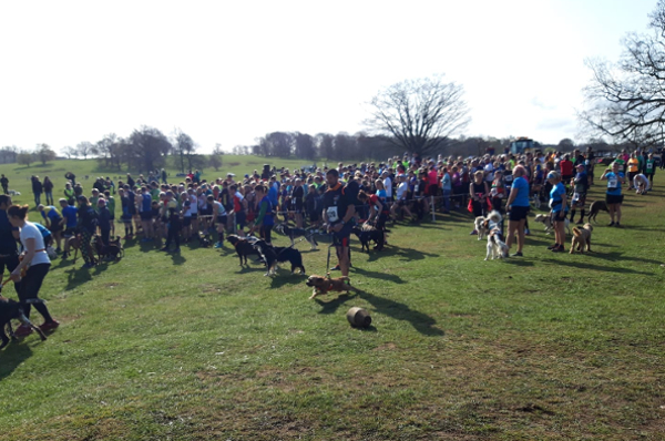Runners And Dogs At The Grantham Cup 10K